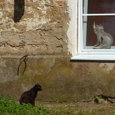 Leningrad oblast: cats in Barussinka