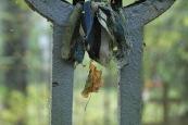 Leningrad oblast: Estonian Freedom-cross in Vanaküla cemetery
