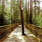Leningrad oblast: park in Sosnovyi Bor